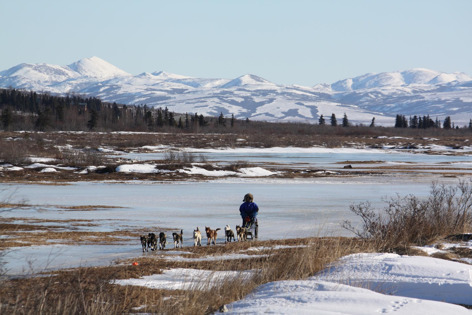 The lack of snowfall has hampered racers in the Iditarod as well as made hunting and travel between villages difficult. Photo by Fisher Dill